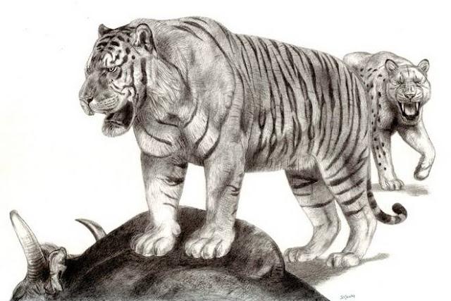 pleistocene giant tiger