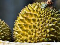 Manfaat Buah Durian bagi kesehatan tubuh dan Bahaya memperbanyak konsumsi buah Durian!!