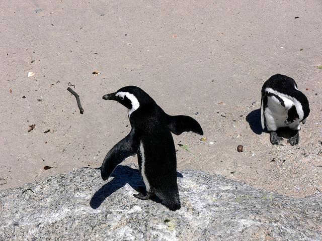 pinguinos voladores