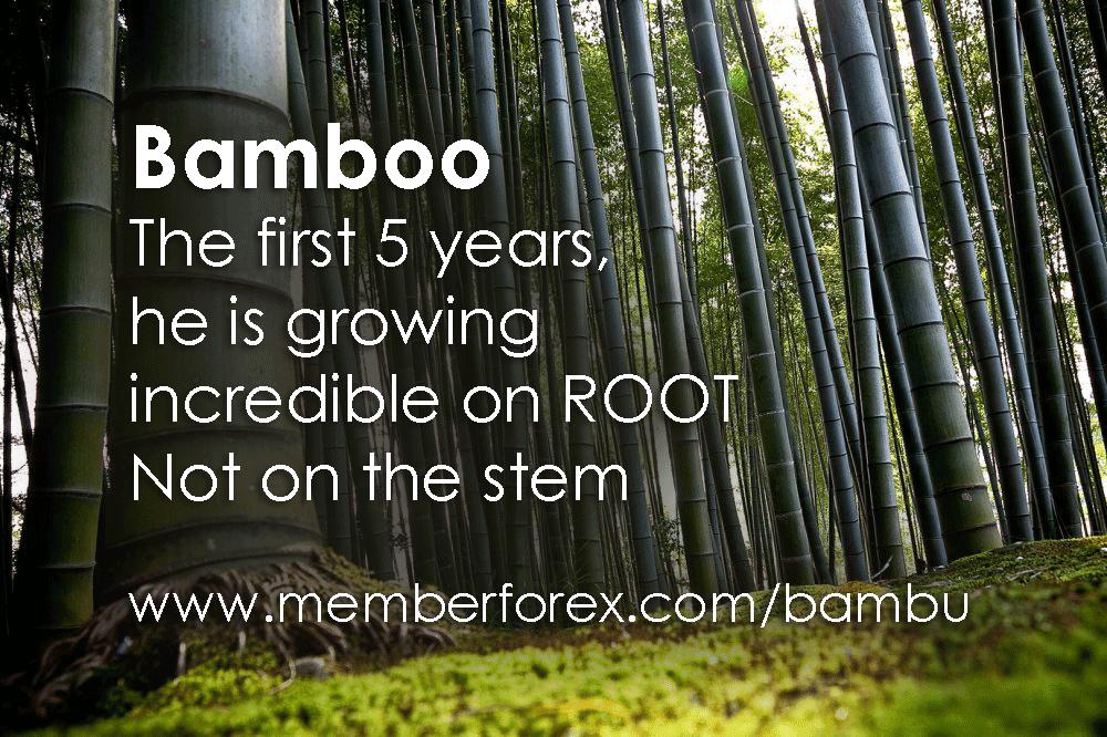 filosofi sukses dari sebuah bambu, filosofi sukses, belajar sukses