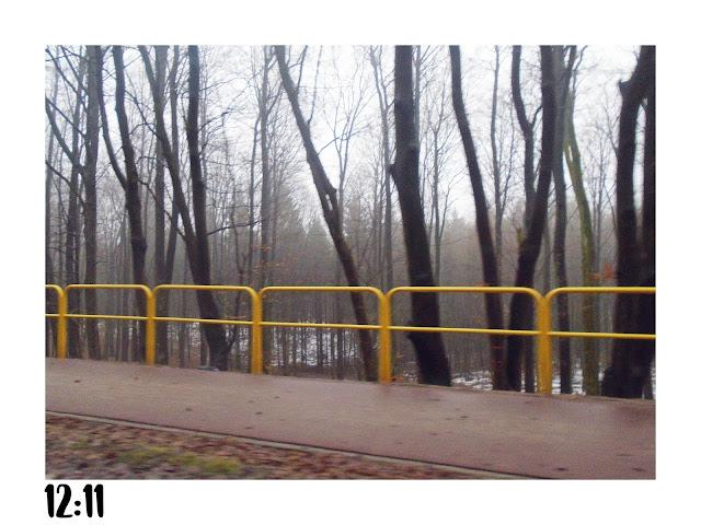 zdjęcie z samochodu. widok na ścieżkę rowerową, żółte barierki oraz drzewa.