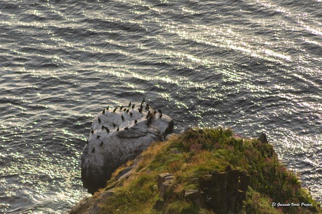 Cormoranes Moñudos, Isla de Runde, Noruega por El Guisante Verde Project