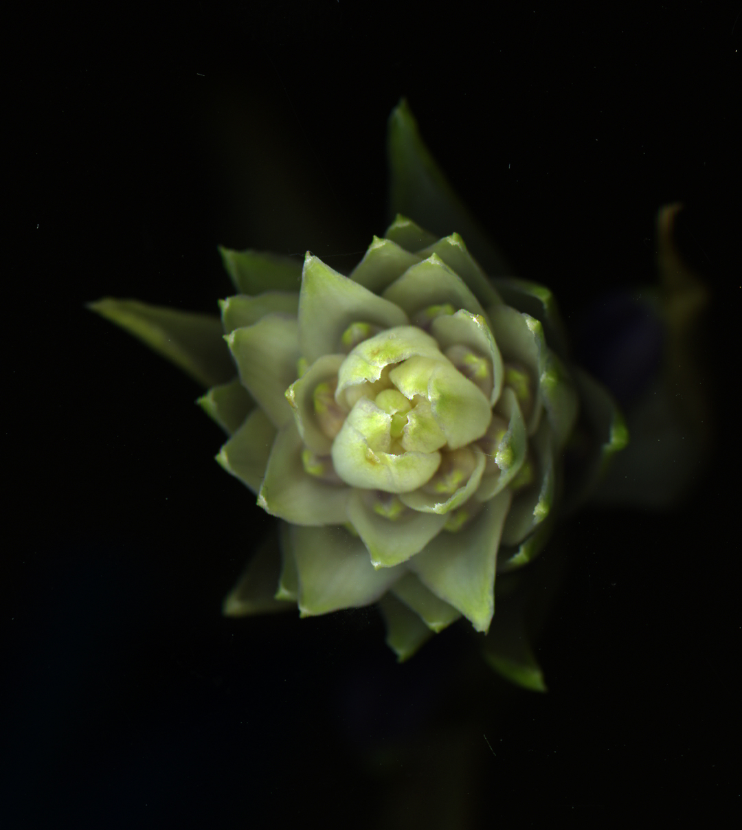 Alex Waterhouse-Hayward: Some Of My Plants Don't Bark on