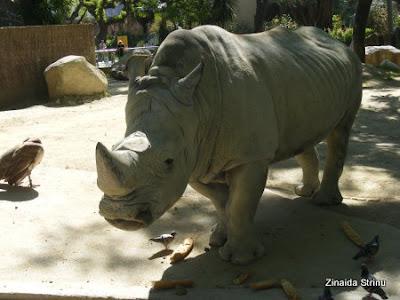 zoo-barcelona-rinocer