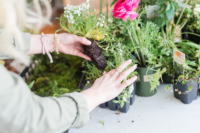 Planting spring annuals in recycled containers