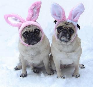 Adorable Easter pets photos