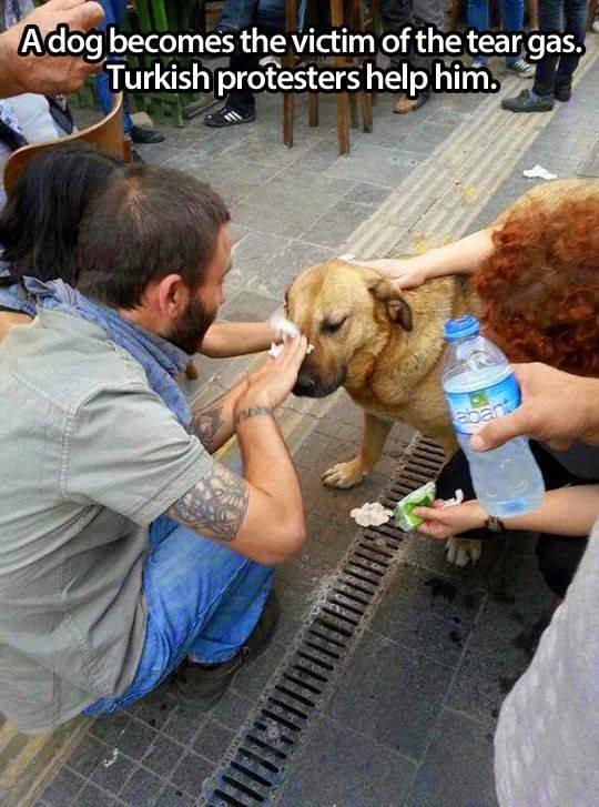 Mengharukan! Saking Cintanya 16 Orang Ini Rela Menolong Hewan Yang Terkena Musibah