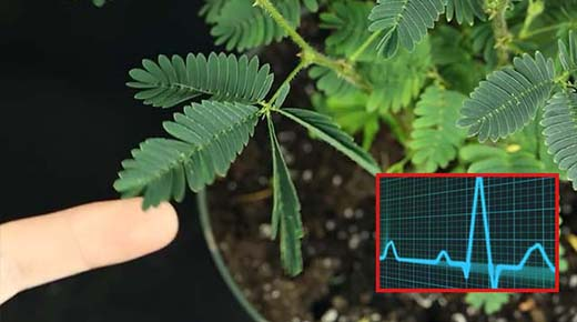 Las plantas pueden contar - La creciente evidencia de que las plantas son conscientes