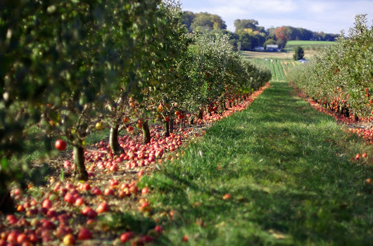 Waiting for apple picking season: When waiting for God's timing seems like eternity