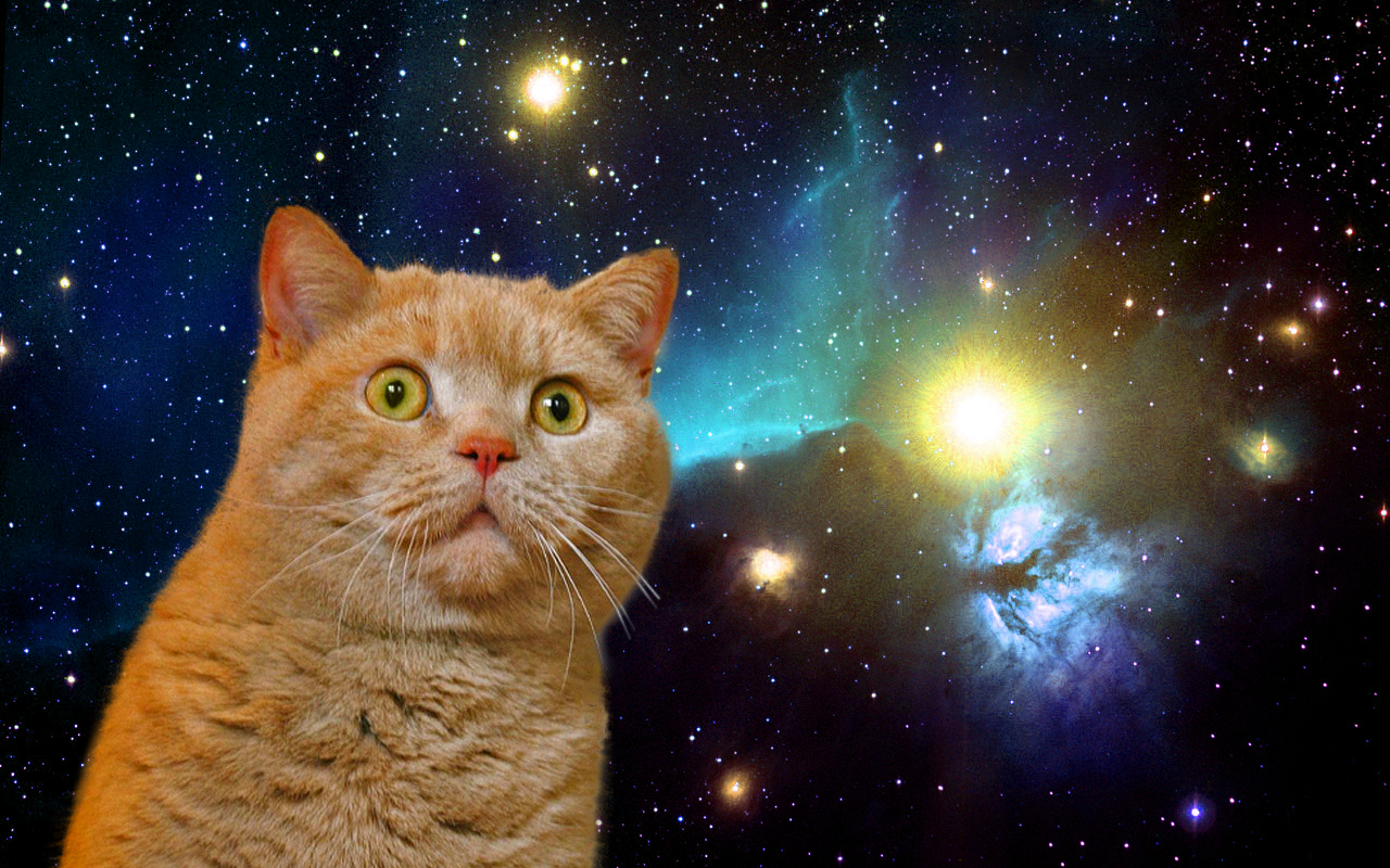 Kitty's in Space Galaxy - Pics about space
