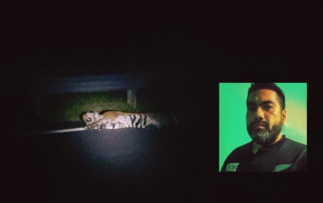 Pemandu Luah Rasa Terkilan Dituduh Sengaja Langgar Harimau !!..