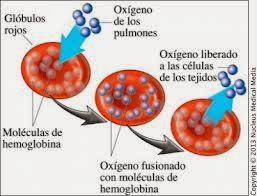 anemia por deficiencia de hierro pautas nacionales para la diabetes