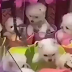 Fliperama chinês causa fúria após colocar CÃES DE VERDADE em brinquedo com garras feito pra pelúcia