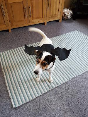 Bracken is ready for halloween