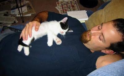 Imagen tierna gatito