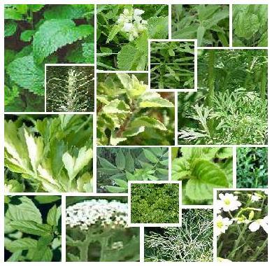 Contoh Pengolahan Produk Makanan Herbal