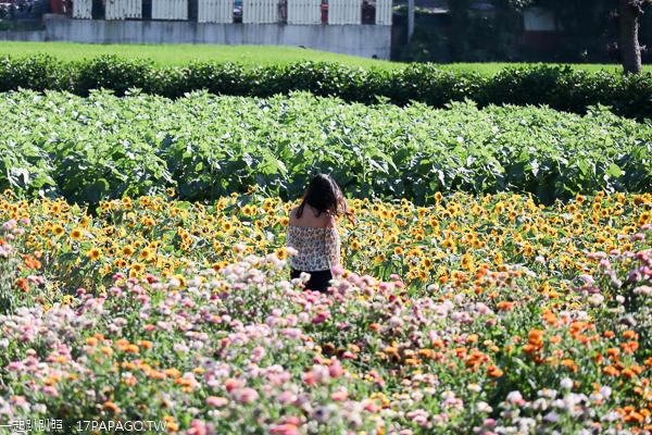 台中后里|中社花市|2019百合花和數十種花海美翻天|婚紗外拍熱門景點