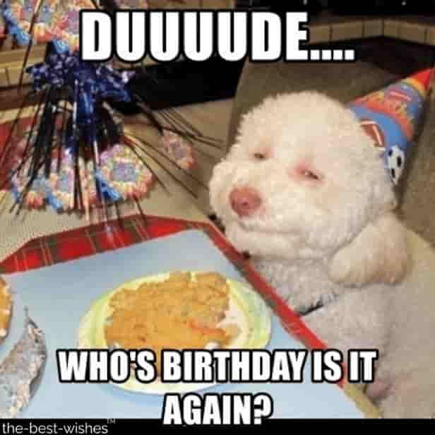 sarcastic dog funny birthday memes