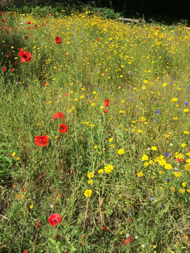 wild-flowers-in-a-field-at-forest-farm-cardiff