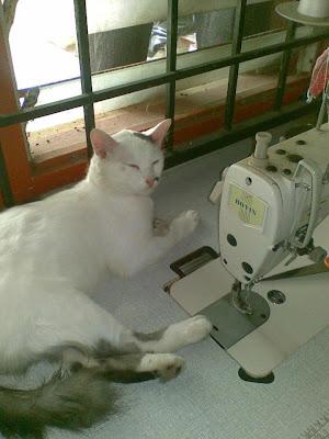 gambar kucing putih duduk di atas mesin jahit