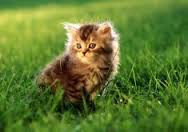 New Baby Cats Animal Hd Wallpaper2