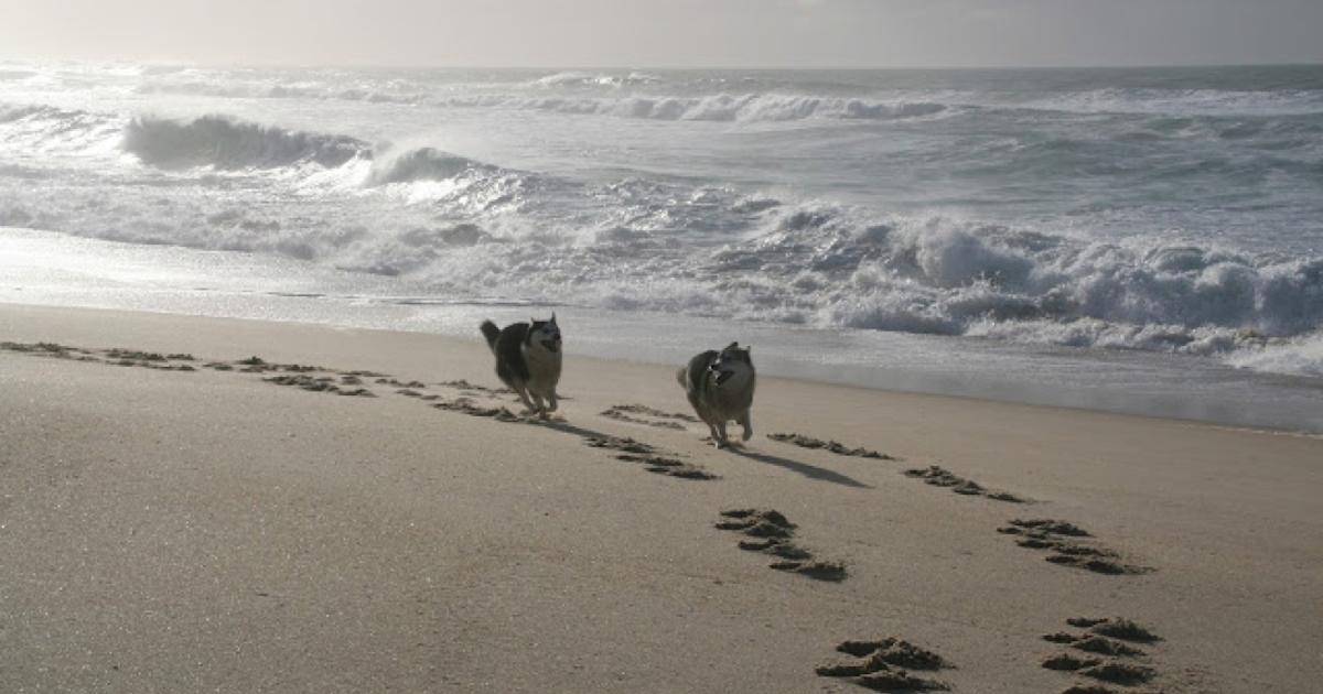 12 000 ans que le chien partage la vie de l'homme