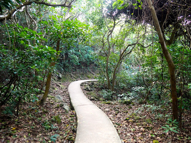Forest hiking trail to Pak Tam Au from Tai Long Wan, Hong Kong