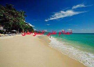 أحلامٌ على الشّواطئ