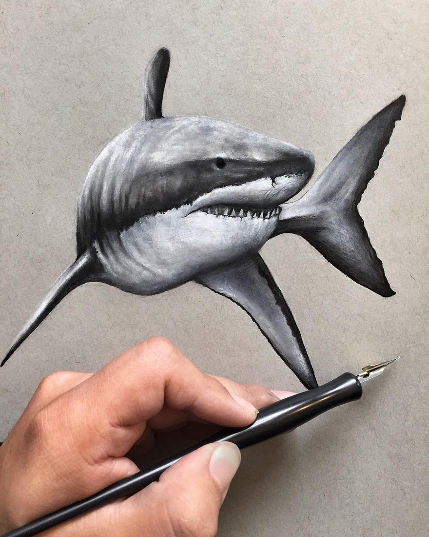 07-Great-White-Shark-Jonathan-Martinez-Realistic-Pencil-Animal-Drawings-www-designstack-co
