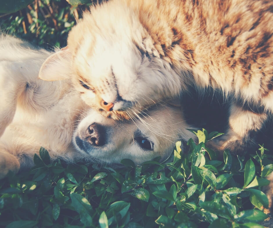 How Having A Pet Can Make The Quality Of Your Life Better | animal cuddles