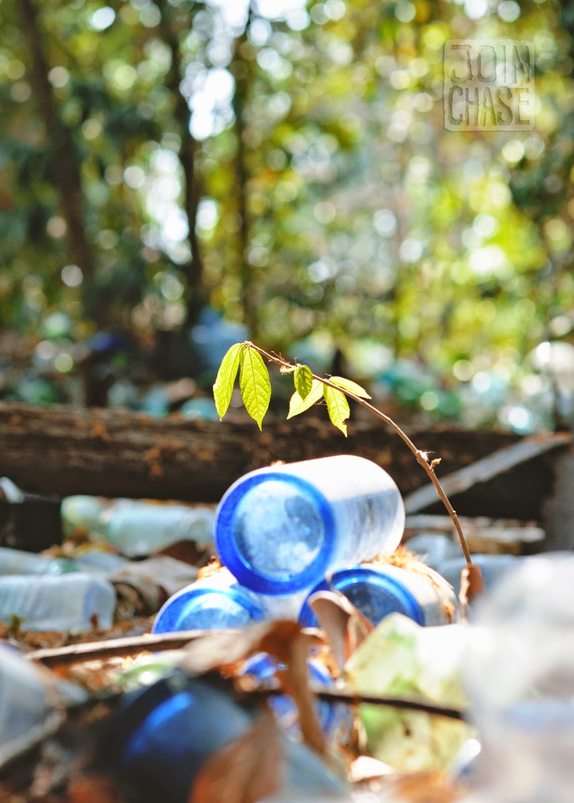 A stack of blue bottles and a plant in sunlight at Nagar Glass Factory near Yangon, Myanmar.