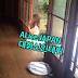 Alice JAPAN기획사 대형신인 데뷔 임박!