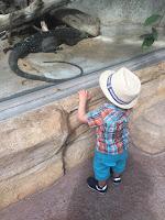 La ferme aux crocodiles, le varan