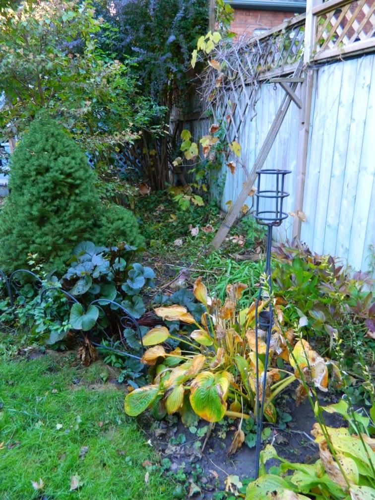 Annex garden cleanup Annex east bed Paul Jung Toronto Gardening Services before