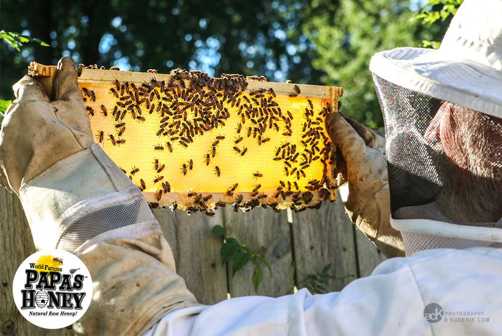 Papa's Honey - Michigan Natural Raw Honey Supplier - A C