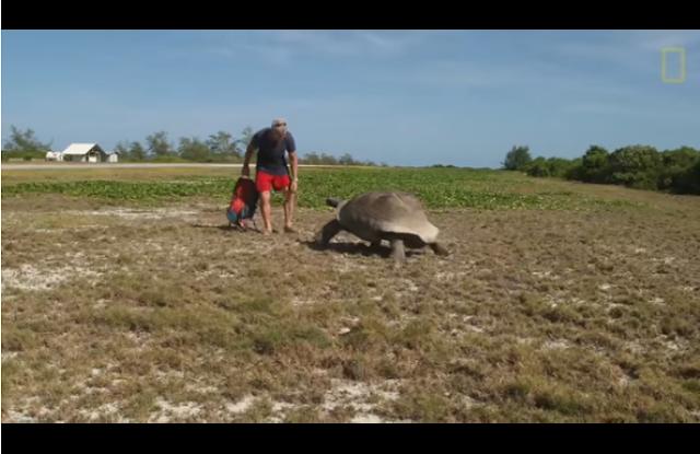 Interrumpe a una tortuga que tiene sexo, y es perseguido