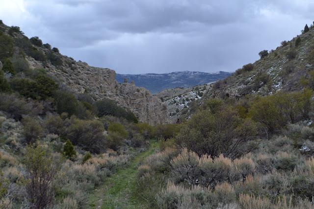 rising upward in Harris Canyon