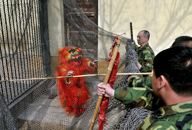 Preventative drill to manage escaped animals at a zoo in Taiyuan, Shanxi province, China. April 2013. Zoo employee dressed in a dragon costume is cornered by other zoo employees. The Zoo Houdinis and other stories. marchmatron.com