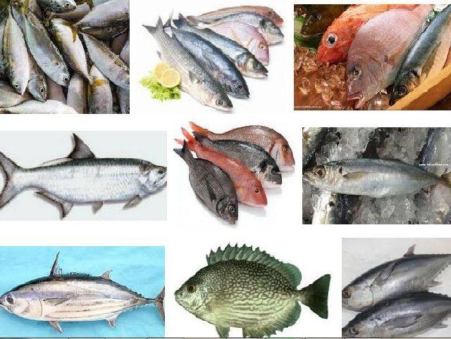 Nama Nama Ikan Laut Dangkal