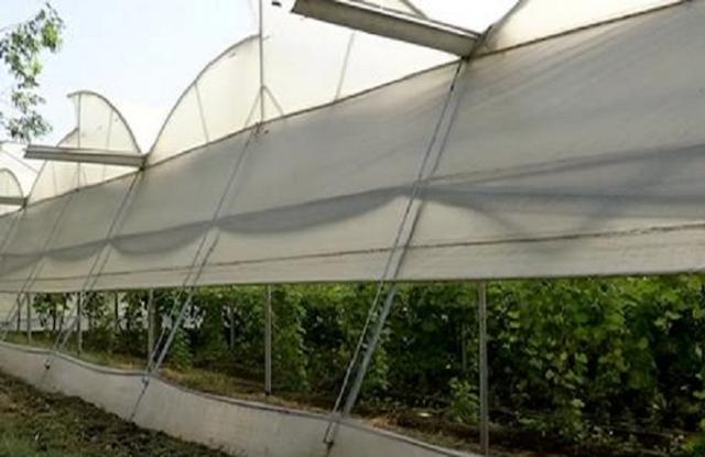 पॉली हाउस के नाम पर किसानों से ठगे सात लाख रुपए | BHOPAL NEWS