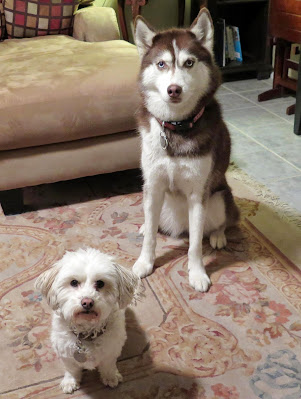 The Wait dog command could save your dog's life, dog training, train my dog, dog commands