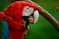 animal bird close up