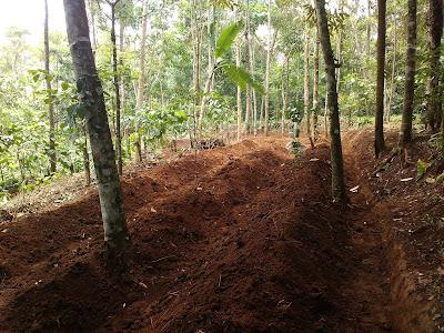 persiapan tanah untuk menanam cabai