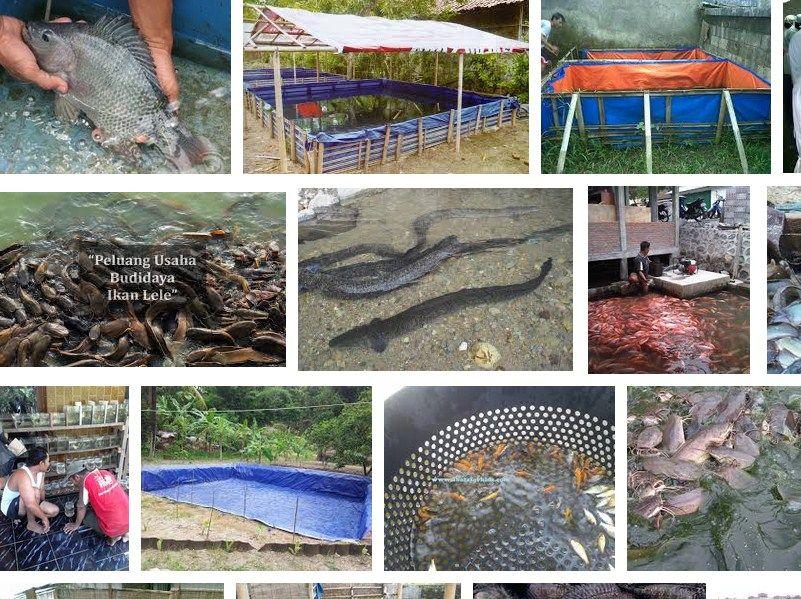 cara membuat kolam ikan koi yang benar