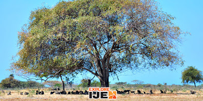 safari satwa taman nasional baluran