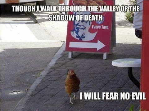 Funny chicken memes - photo#32