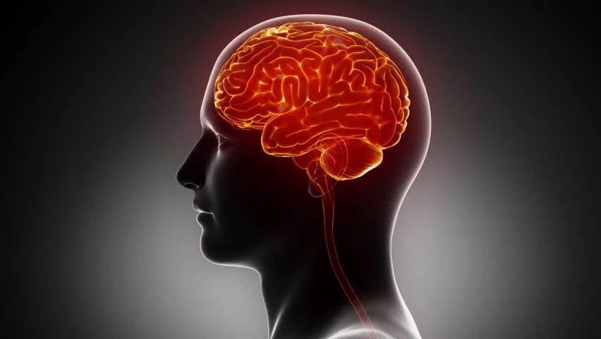 8 Cara Efektif Meningkatkan Kemampuan Otak Anda