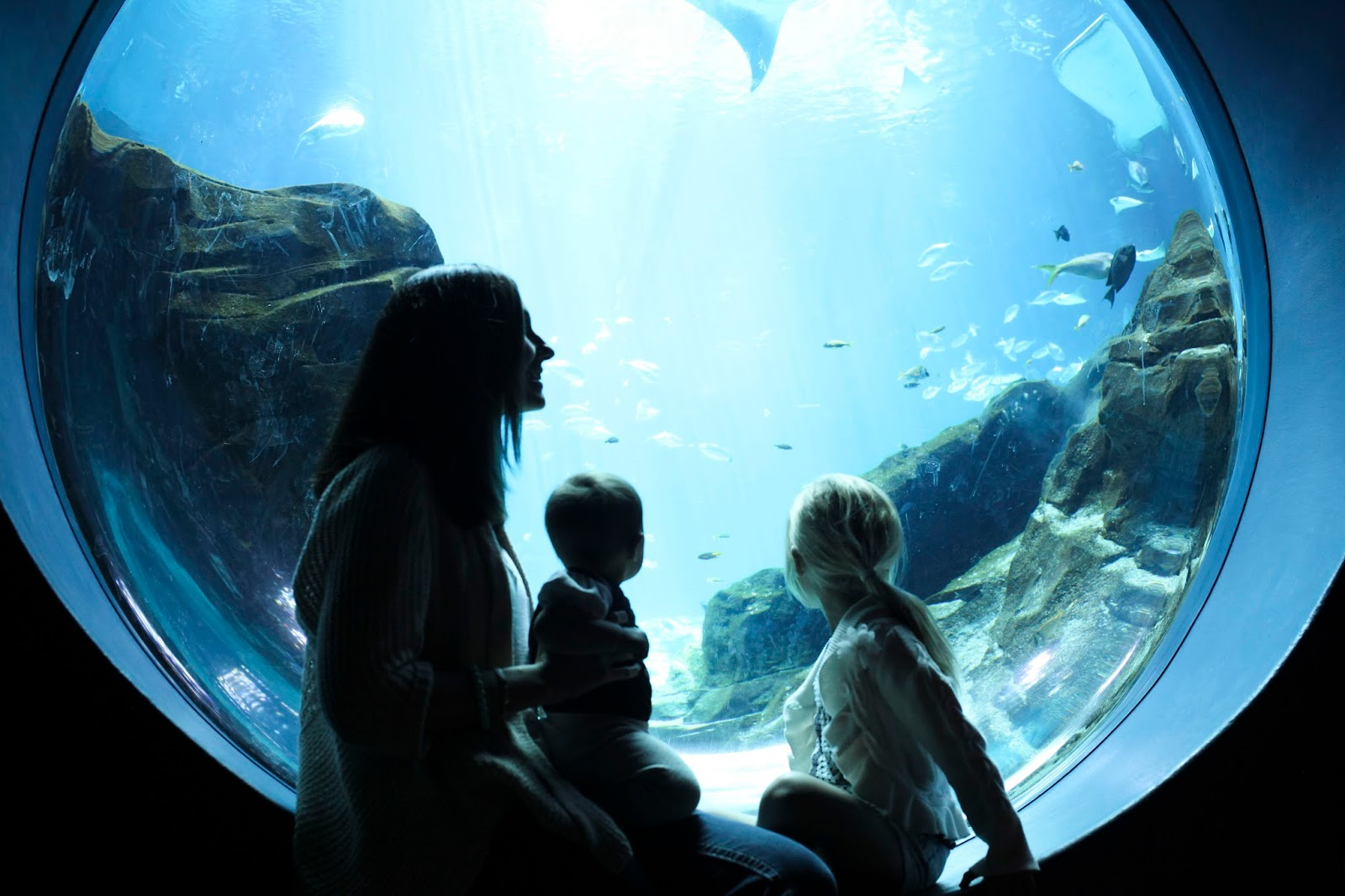 Amy West and daughters enjoy underwater view in the Georgia Aquarium
