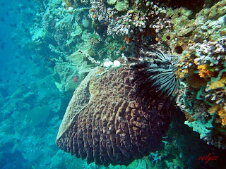 Wakatobi Part 4: Wangi Wangi-Unexpected Beauty