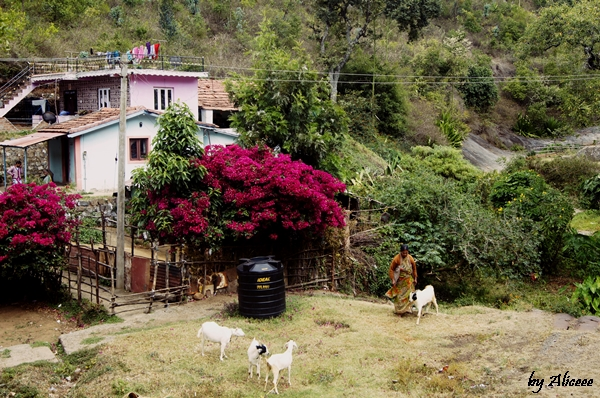 sat-In-India